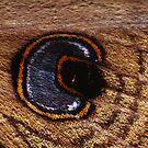 Mystery XXXIV - Moth Wing by Biggzie