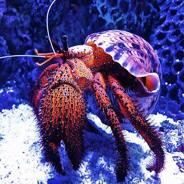 Hermit Crab by matildabishop