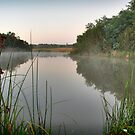 Framed Water Reed by Joel McDonald