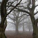 Trees in fog by Dan Norcott