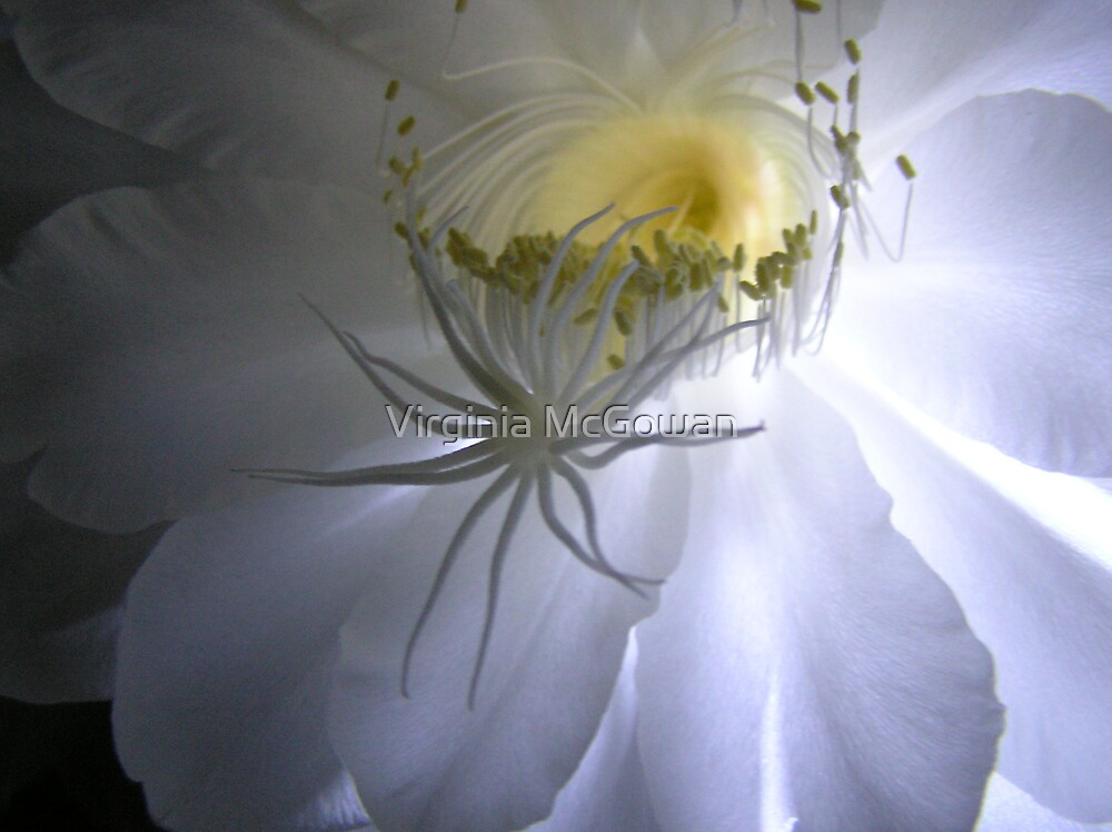 Cereus Cactus #3 by Virginia McGowan