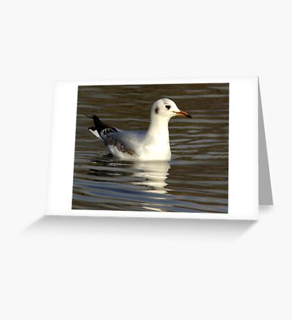Seagull #1 Greeting Card