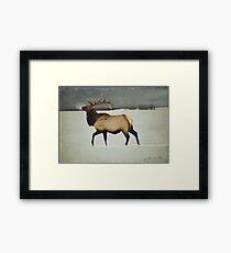 american elk in silver mist Framed Print