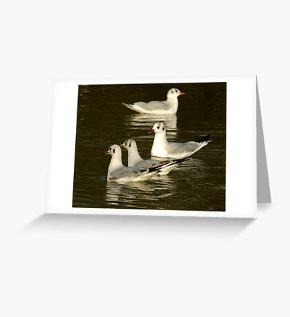 Seagulls #2 Greeting Card