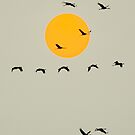 Common Cranes Flying in Front of Orange Setting Sun by visualspectrum