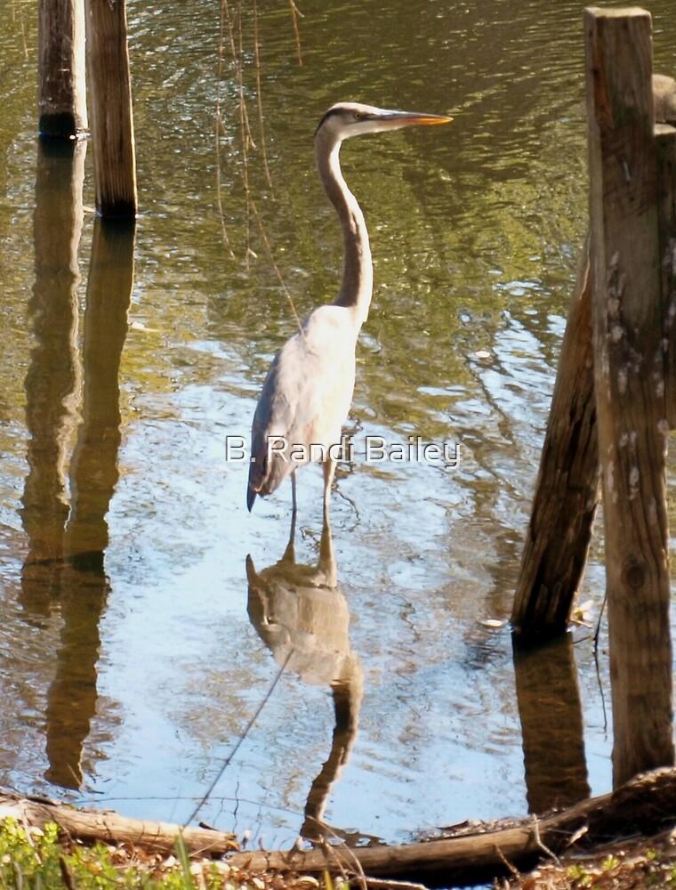 Heron in reflection by ♥⊱ B. Randi Bailey