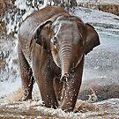 Baby Asian Elephant by AnnDixon