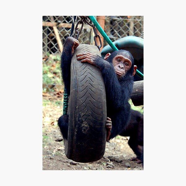 Chimp Swing Photographic Print
