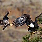 Hawk Attack by DawsonImages