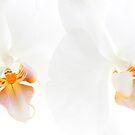 Two White Orchids by Ann Garrett