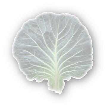 Cabbage Leaf by cherylintexas