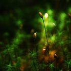 Artscape.....The Micro Rainforest by Imi Koetz