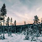 Fir Tree Forest in Warm Evening Light on Cold Winter Day (Norway by visualspectrum