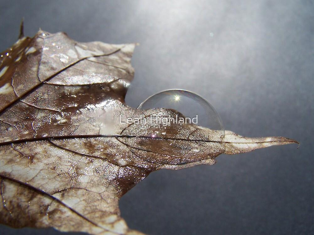Effervescence by Leah Highland