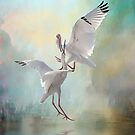 Duelling White Ibises by Brian Tarr