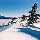 Cross-County Ski Run in Norwegian Winter Landscape Shot on Film by visualspectrum