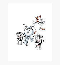 Farm Animals Photographic Print