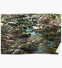 Fall Stream in the Smokys Poster