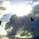Birds in the Sunset by Hummingbyrd
