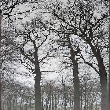 Hoge bomen 2  ~ trees 2 by CamphuijsenArt