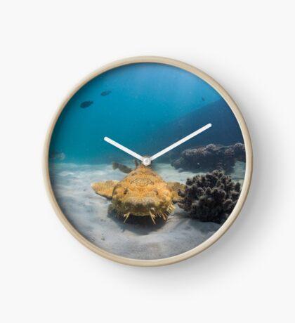 Wobbegong, Tangalooma Wrecks Clock