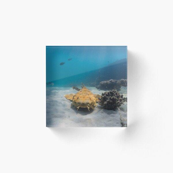 Wobbegong, Tangalooma Wrecks Acrylic Block