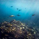 Flinders Reef by Kara Murphy