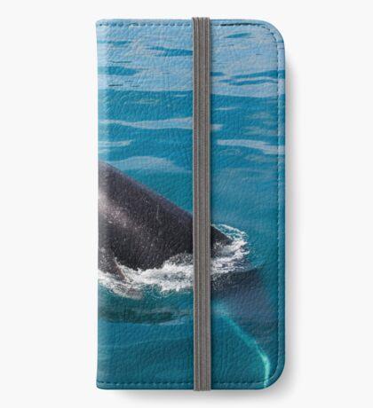Humpback whale calf, Moreton Bay iPhone Wallet
