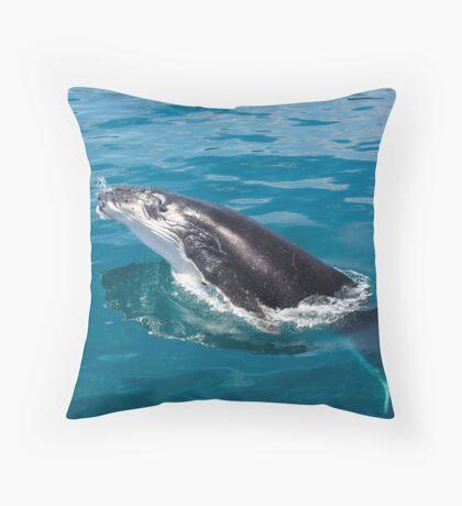 Humpback whale calf, Moreton Bay Throw Pillow