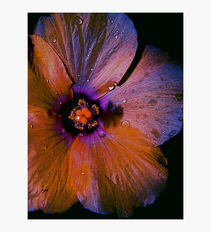 ALIEN FLOWERS 1 Photographic Print