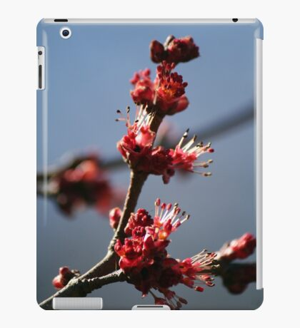 Signs of Spring - 1 iPad Case/Skin