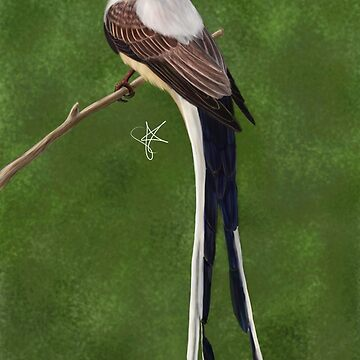 Scissor-tailed Flycatcher by Jakathine