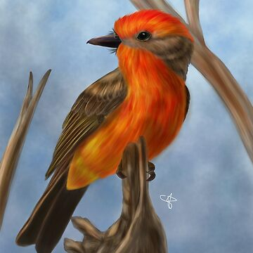 Vermilion Flycatcher by Jakathine