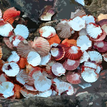 Sea Shells  by paulbell