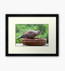 Pigeon & The Cat Pellets Framed Print