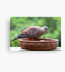 Pigeon & The Cat Pellets Canvas Print