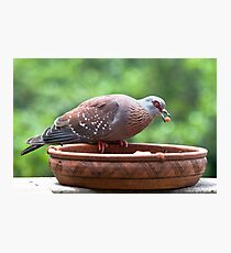 Pigeon & The Cat Pellets Photographic Print