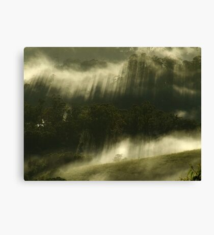 """""""Mist in the Trees"""" Canvas Print"""