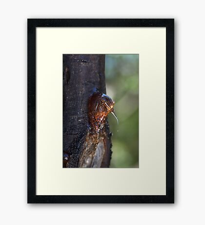 Nature's Toffee Framed Print