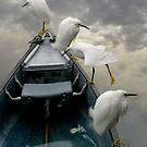 Birds, Boat and Beyond. by Henry Murray