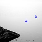 Ducks by Siah Fade