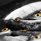 Fish eyes by oddoutlet