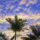 Palm by Daniel Rayfield