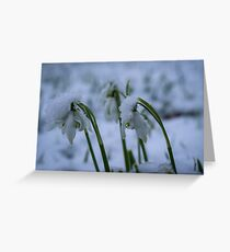 Snowdrops in the Snow Greeting Card