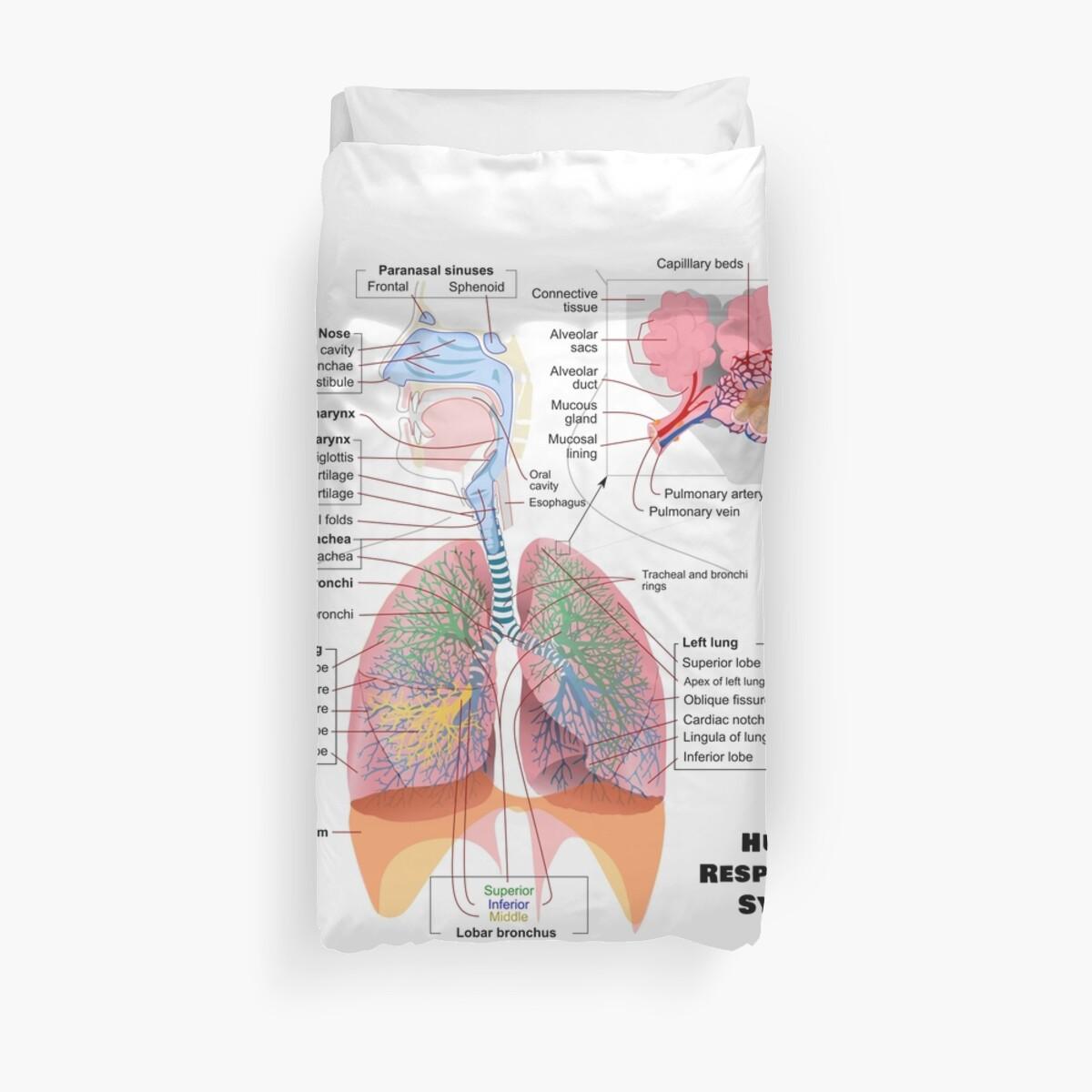 Fundas nórdicas «Diagrama del sistema respiratorio humano» de ...