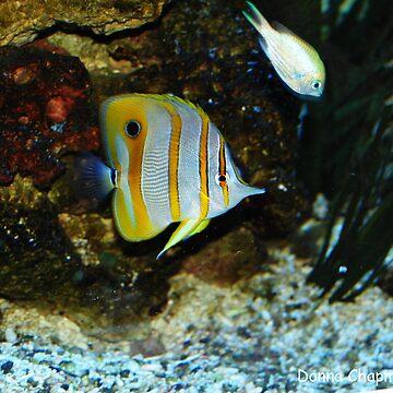 Tropical Fish by donnachapman