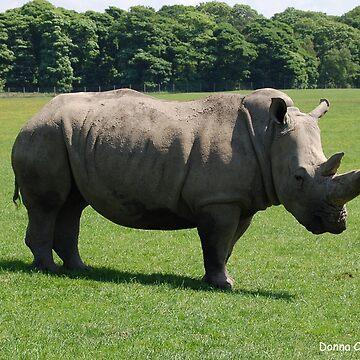 Rhino by donnachapman
