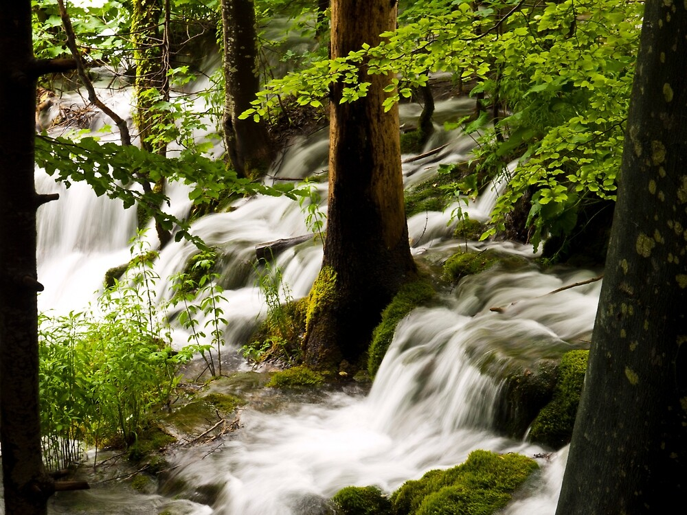 Forest Flows by Rae Tucker