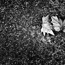 Leaves in the wind by Paul Scrafton