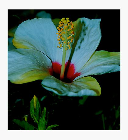 ALIEN FLOWERS 7 Photographic Print